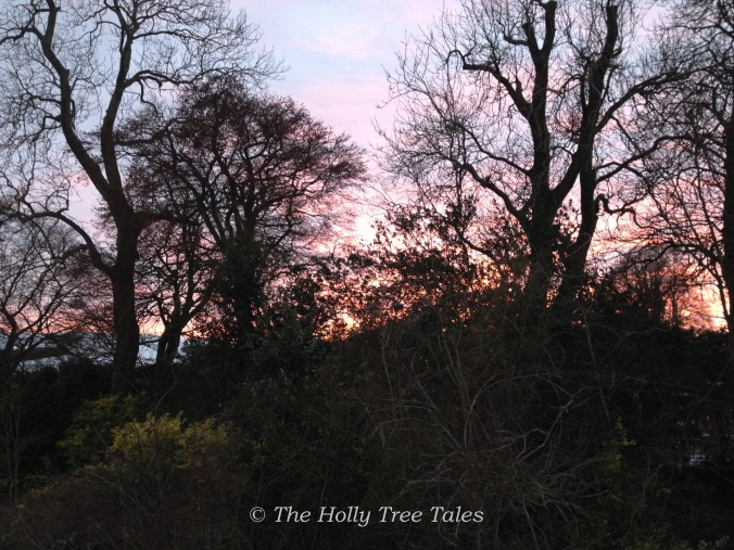 A magnificent sunset, captured through overgrown trees, shrubs and rambling roses.