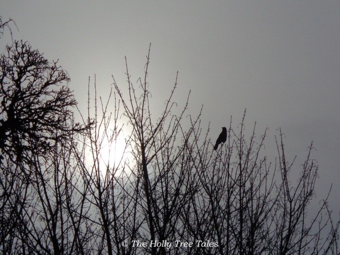 A solitary bird in tune with the dawn chorus.