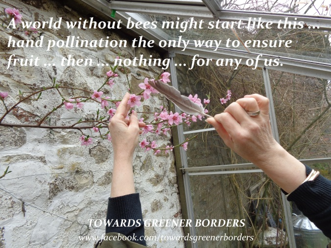 DSC06017 - Quote re pollination - TGB signed