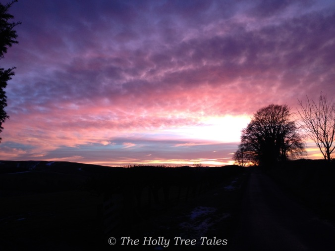 IMG_2980 - THTT signed. Sunset. Berwickshire Hills. Purple Pink. Sky. (c) Holly M Maxwell Boydell.  www.TheHollyTreeTales.com