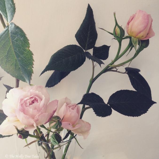 IMG_9449 - THTT signed. Roses. (c) www.TheHollyTreeTales.com