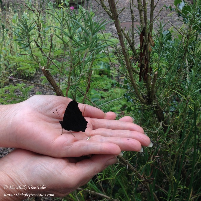 Butterfly. Hand. Freedom. Authenticity. Hope. © The Holly Tree Tales www.thehollytreetales.com