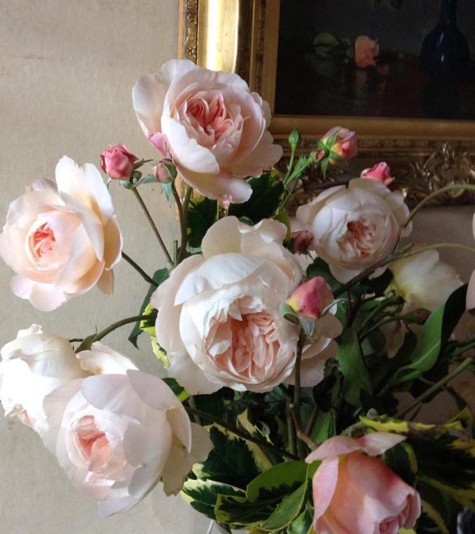 Rose. A Shropshire Lad. David Austin Roses.  (c) The Holly Tree Tales.  www.TheHollyTreeTales.com