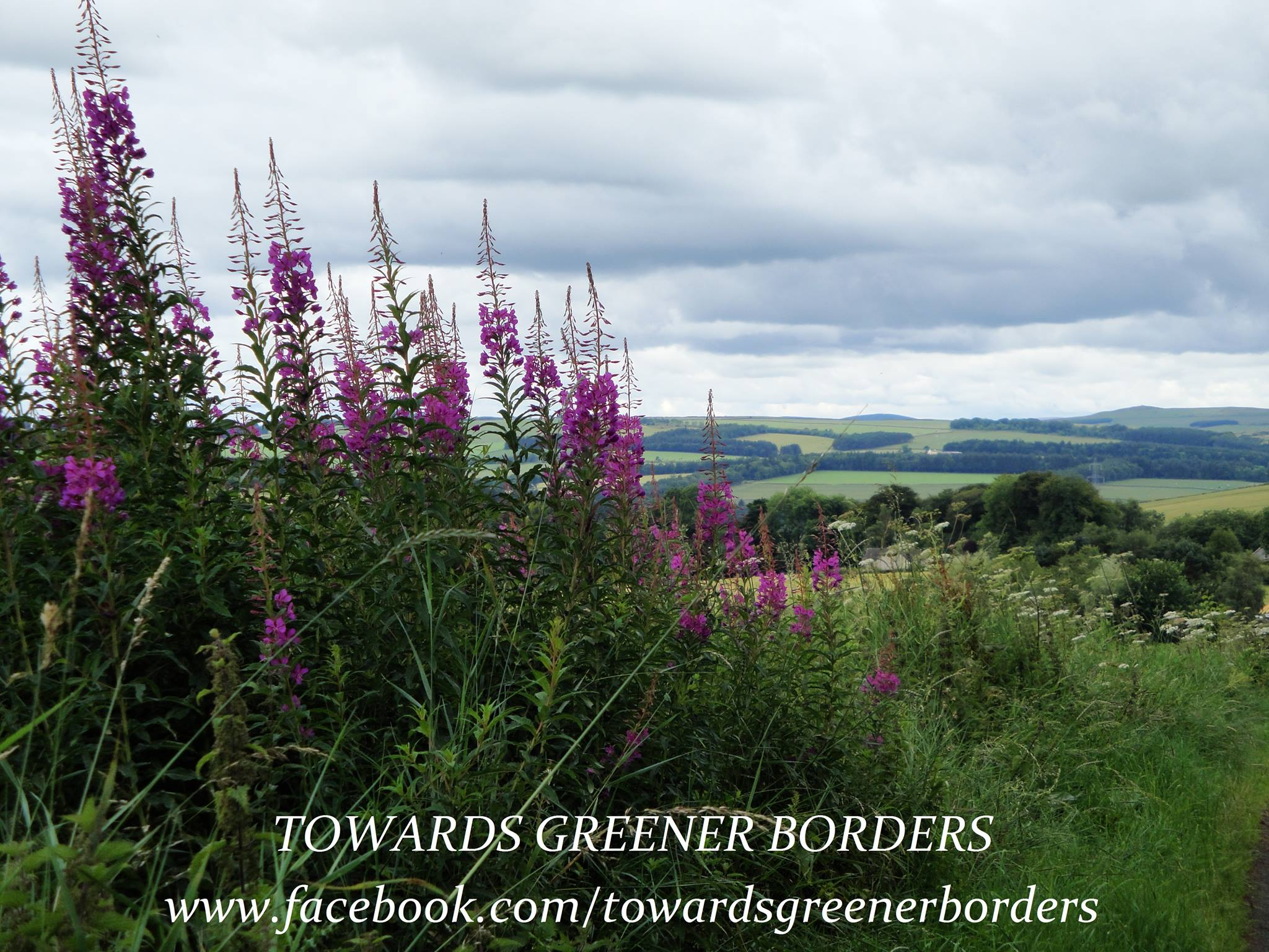 Countryside. Land. Trees. Sky. Hedgerows. Rosebay Willowherb. Views. Towards