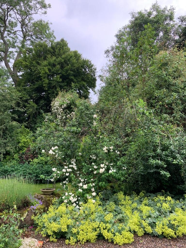 White. Green. Trees. Rambling roses. Holly's Organic Garden.